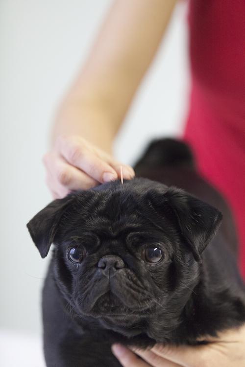 »Lastniki so vedno bolj odprti za alternativne metode zdravljenja živali.«